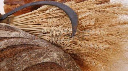 ESSERE TERRA – 8a Giornata del biologico e dell'agricoltura contadina